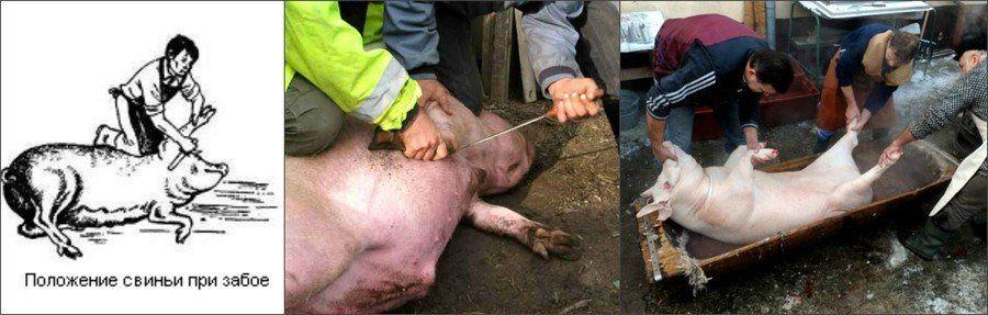 Резать мясо свиньи во сне