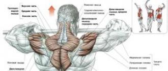 kiegyensúlyozott étrend izomhipertrófia érdekében